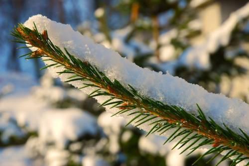 brad-iarna