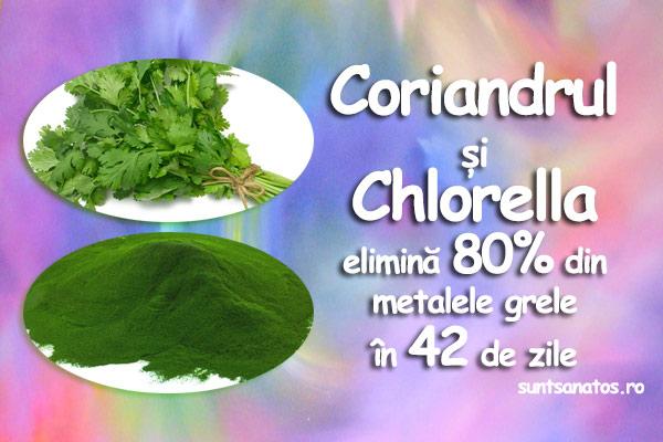 coriandru-chlorella