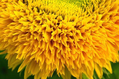 floare12
