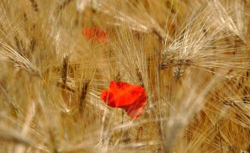 floare19