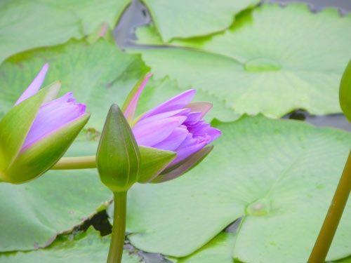 floare20
