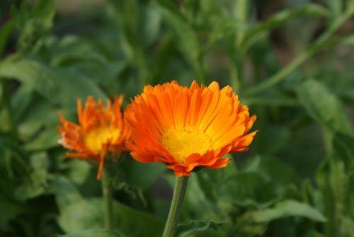 floare22