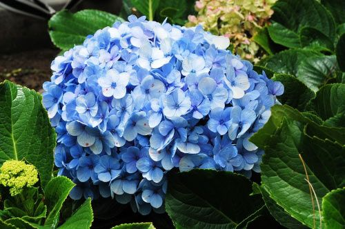 floare23