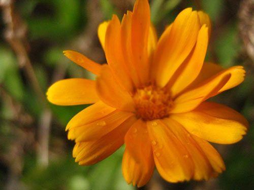 floare28