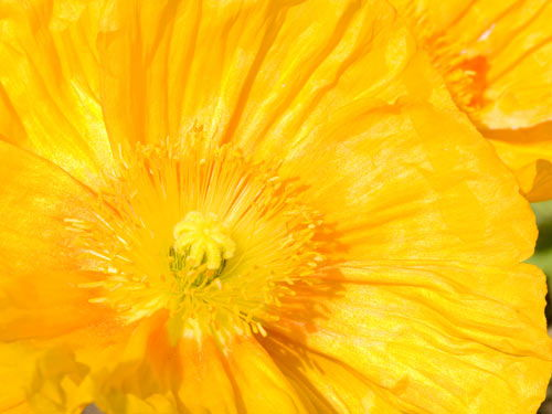 floare29