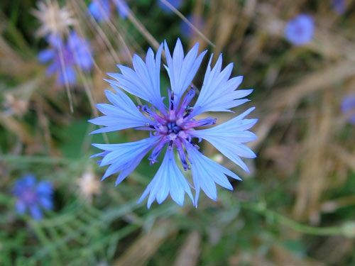 floare31
