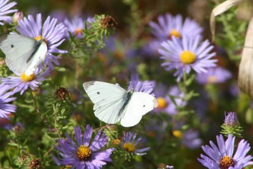floare33