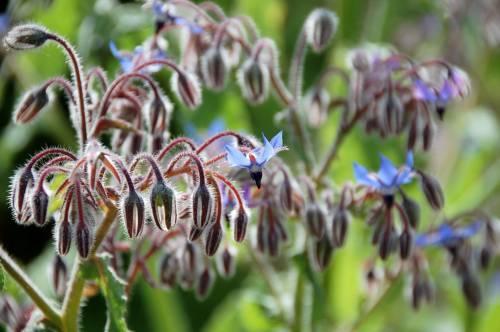 floare36