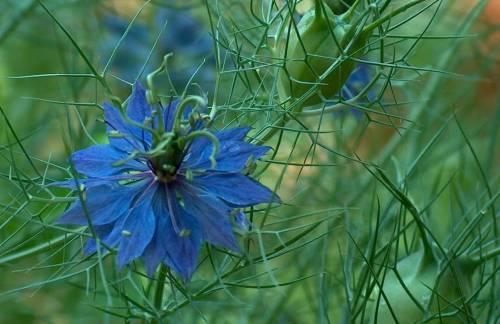 floare39