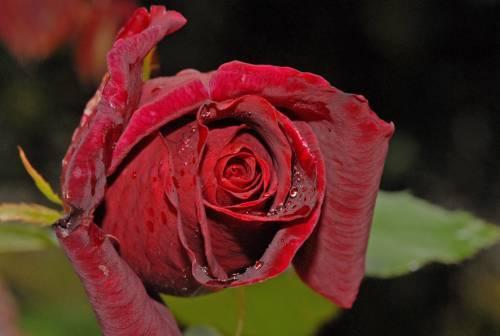floare50