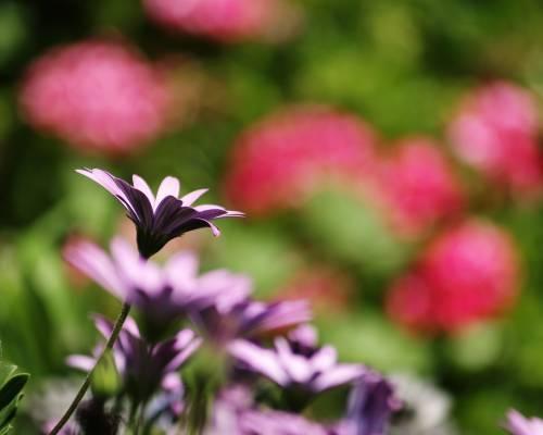 floare54