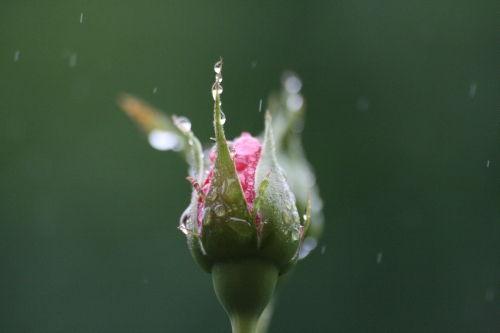 floare7
