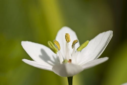 floare83