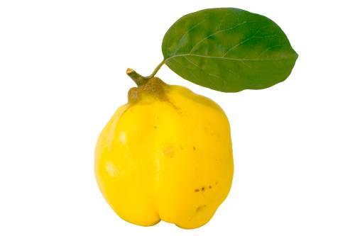 fructe-gutuie