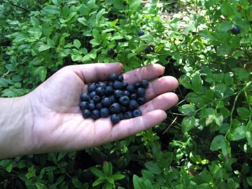 fructe19