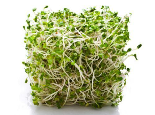 germeni alfalfa