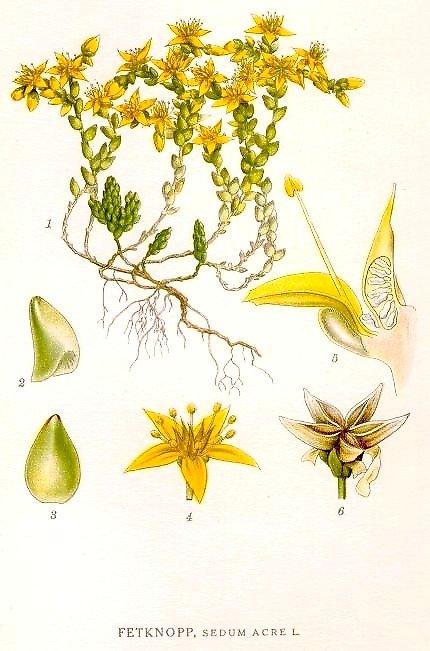 iarba-sordina2
