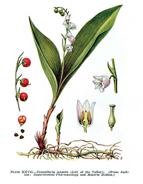 lacramioara2