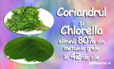 Coriandrul si Chlorella elimina 80% din metalele grele in 42 de zile