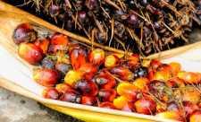 Uleiul de palmier - Pericol pentru sanatate