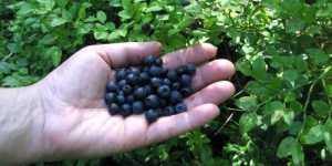 Fructele si mentinerea sanatatii