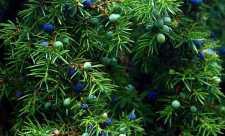 Maria Verdi - Trateaza bolile reumatice cu plante medicinale