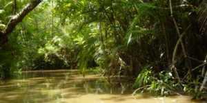 Vindecare cu Ayahuasca in inima Amazonului - O relatare inedita