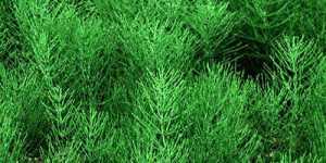 Remediile naturiste utilizate in terapia infectiilor urinare