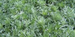 Plantele amare invioreaza trupul si sufletul