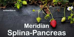 Tinctura Meridian Splina-Pancreas