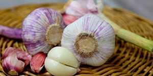 Utilizarea usturoiului ca remediu medical
