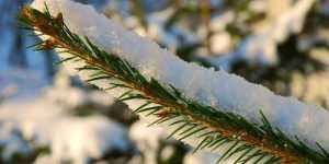 Cateva recomandari Ayurvedice simple pentru perioada de iarna