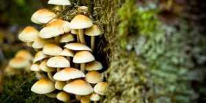 6 moduri prin care ciupercile pot salva lumea