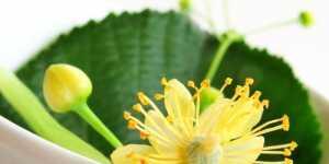 Remedii pentru curatarea si dezintoxicarea rinichilor