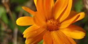Culoarea portocalie - semnificatii si efecte