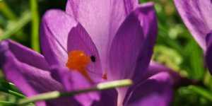 Aromaterapia - elemente practice