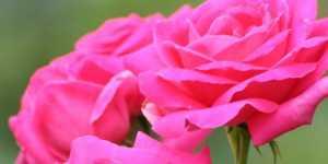 Topul celor mai eficiente leacuri naturale in tulburarile de ciclu menstrual
