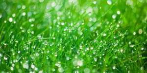 Baile terapeutice cu plante - un mijloc stravechi de vindecare