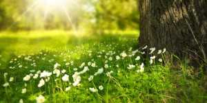 Anti-gripal natural: vitamina D