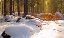 Bogatii Rusiei au dat civilizatia pe comuniunea cu natura