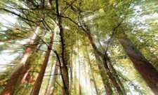 Padurea ne incarca organismul cu energie