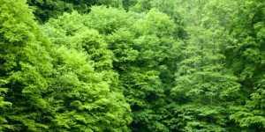 Puterea terapeutica a copacilor