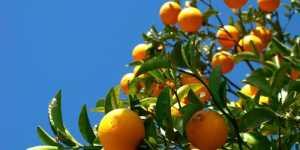 Portocala - sursa bogata in vitamine