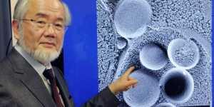 Premiul Nobel 2016: savantul Yoshinori Ohsumi a dovedit ca postul este benefic pentru organism