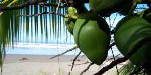 Longevitate - Zona albastra Nicoya, Costa Rica