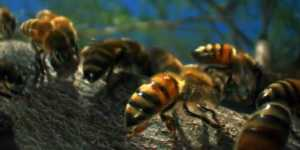 Louie Schwartzberg: Frumusetea ascunsa a polenizarii