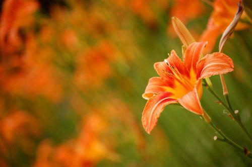floare11