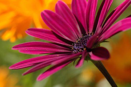 floare14