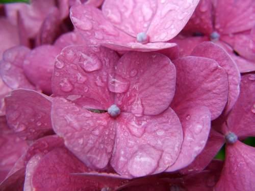 floare59
