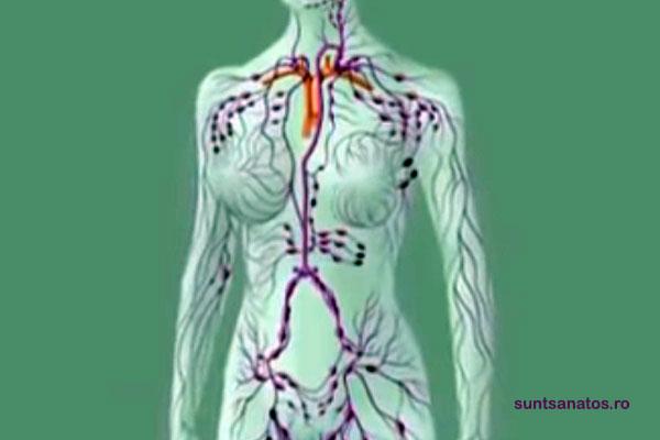 sistem limfatic